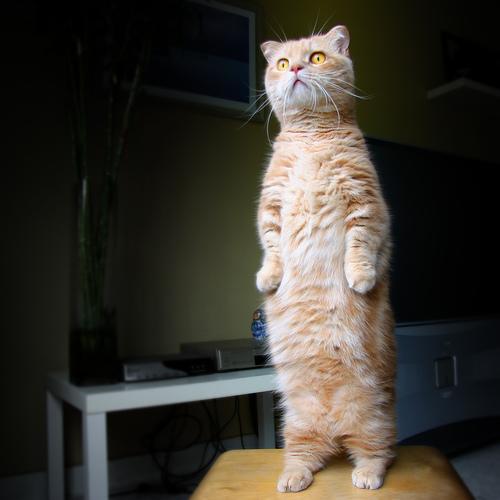 Standing Cat (Original)