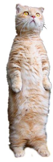 Transparent Standing Cat (Smallbrainfield)