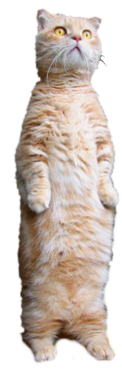 Transparent Standing Cat (Smallbrainfield)